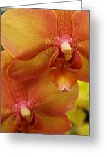 Orchids Delight Greeting Card