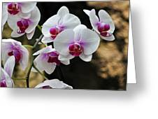 Orchids For Your Day Greeting Card