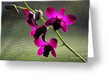 Orchids In The Sunlight Greeting Card