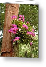 Orchids On Tree Greeting Card