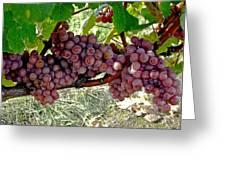 Oregon Burgundy Greeting Card