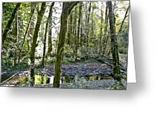 Oregon Forest Greeting Card