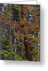 Oregon Madrone Greeting Card