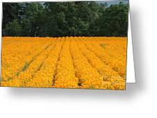Oregon Orange Field Greeting Card