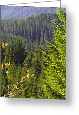 Oregon Trees Greeting Card