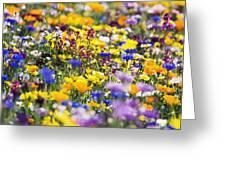 Oregon Wildflowers Greeting Card
