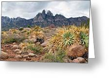 Organ Mountains  Sotol Plants Greeting Card