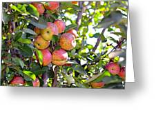 Organic Apples In A Tree Greeting Card