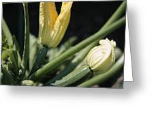 Organic Courgettes Greeting Card