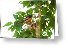 Oriole And Babies Greeting Card
