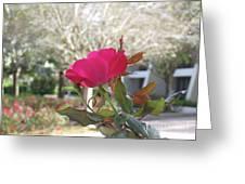 Orlando Rose Greeting Card