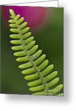 Ornamental Fern Greeting Card
