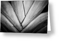 Ornamental Palm Greeting Card