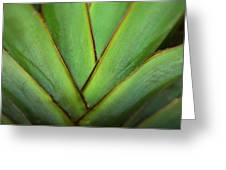 Ornamental Palm Detail Greeting Card