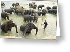 Orphaned Elephants Greeting Card