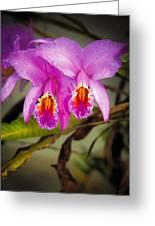 Orquideas Flor De Mayo Del Bosque Nublado Greeting Card