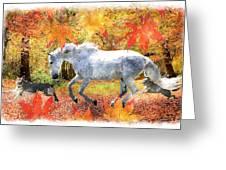 Osada's Fall Fun Greeting Card