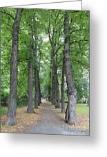 Oslo Trees Greeting Card