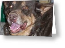 Oso Perro  Greeting Card