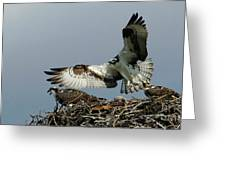 Osprey 2 Greeting Card