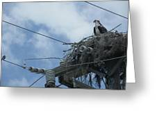 Osprey And Song Bird Greeting Card
