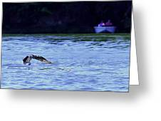 Osprey Cleaning The Lake  Greeting Card