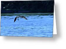 Osprey Environmentalist Greeting Card
