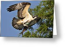 Osprey Flight Greeting Card