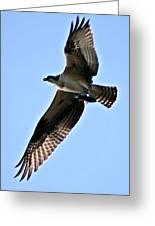 Osprey I Greeting Card