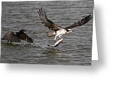 Osprey On The Run Greeting Card
