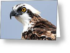 Osprey Profile Greeting Card