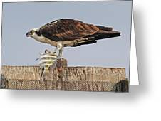 Osprey With Catch Greeting Card