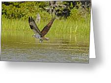 Osprey With Rainbow Trout Greeting Card