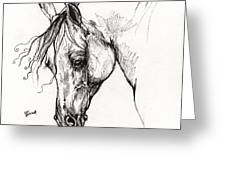 Ostragon Polish Arabian Horse 1 Greeting Card