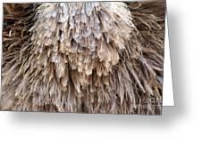 Ostrich Fluff Greeting Card