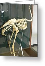 Ostrich Skeleton Greeting Card