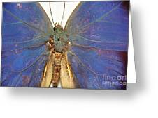 Out Of The Blue.. Greeting Card