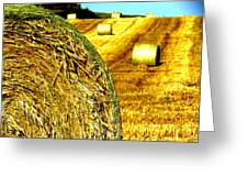 Over Ripe Field Greeting Card