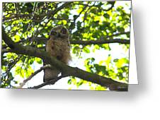 Owl In Central Park Greeting Card