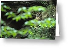 Owl In Woodland, Sachsische Schweiz Greeting Card