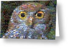 Owl Mosaic Greeting Card