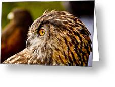 Owl Profile Greeting Card