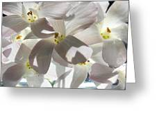 Oxalis Flowers Greeting Card