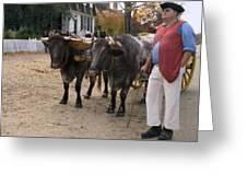 Oxen And Handler Greeting Card