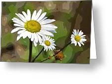 Oxeye Daisy Greeting Card