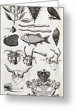 Oxfordshire Animals, 18th Century Artwork Greeting Card