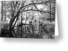 Pa. Country Stream Greeting Card