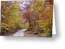 Pachaug State Forest Greeting Card