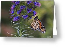 Pacific Grove Monarch Greeting Card