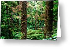 Pacific Rim National Park 14 Greeting Card